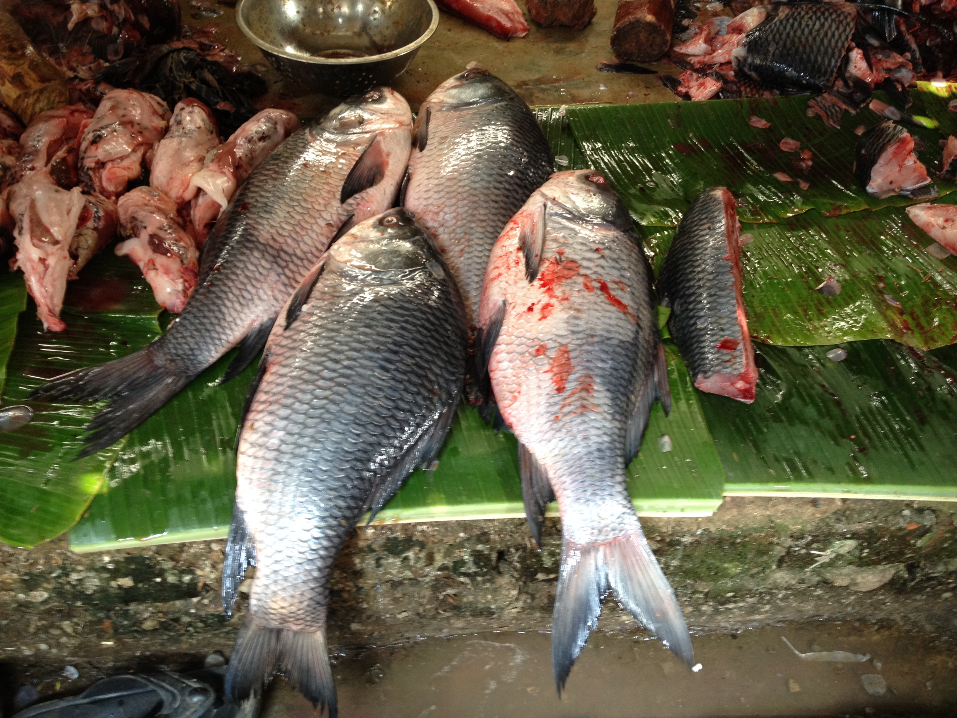 The sight and smell of fish make me happy mohabhoj for What sound does a fish make